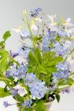 Flores del resorte Foto de archivo