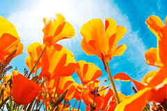 Flores del resorte fotos de archivo