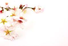 Flores del resorte Imagen de archivo libre de regalías