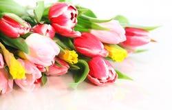 Flores del resorte Imágenes de archivo libres de regalías