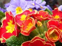 Flores del resorte. Foto de archivo