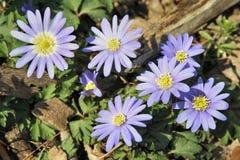 Flores del resorte Fotografía de archivo libre de regalías