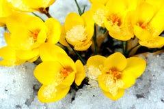 Flores del resorte. Imágenes de archivo libres de regalías