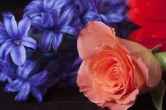 Flores del resorte Fotos de archivo libres de regalías