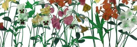 Flores del resorte aisladas en blanco fotografía de archivo
