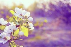 Flores del resorte con sol Imágenes de archivo libres de regalías