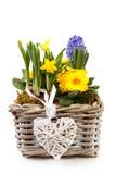 Flores del resorte de la cesta Fotografía de archivo libre de regalías