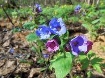Flores del resorte en el bosque Imágenes de archivo libres de regalías