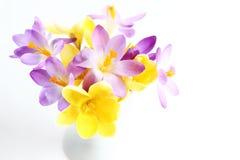 Flores del resorte en el fondo blanco Foto de archivo libre de regalías