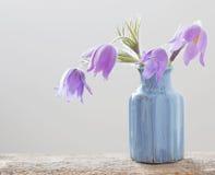 Flores del resorte en el fondo blanco Fotografía de archivo