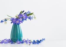 Flores del resorte en el fondo blanco Imagenes de archivo