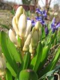 Flores del resorte en el jardín Imágenes de archivo libres de regalías