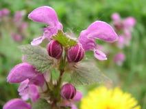 Flores del resorte en el prado fotos de archivo libres de regalías