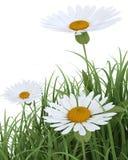 Flores del resorte en hierba en blanco stock de ilustración