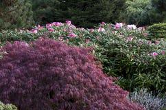 Flores del resorte en jardín Imágenes de archivo libres de regalías