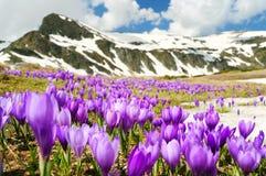 Flores del resorte en montañas