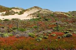 Flores del resorte y dunas de arena en Sur grande Imágenes de archivo libres de regalías