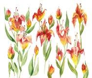 Flores del rojo de la acuarela Imagenes de archivo