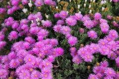 Flores del rojo de los prados Imagenes de archivo