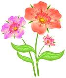 Flores del rojo del resorte Imagen de archivo libre de regalías