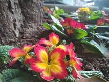 Flores del rojo y del yelon Imágenes de archivo libres de regalías