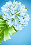 Flores del snowdrop del resorte con la cinta verde imagen de archivo libre de regalías