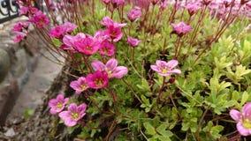 Flores del sol Fotografía de archivo libre de regalías