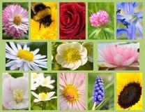 Flores del surtido Foto de archivo libre de regalías
