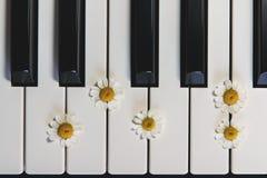 Flores del teclado y de la manzanilla de piano Visi?n superior, cierre para arriba Romántico, concepto fotos de archivo