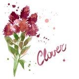 Flores del trébol del estampado de flores Fotos de archivo libres de regalías
