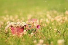 Flores del trébol en una cesta Foto de archivo libre de regalías