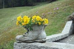 flores del trentino Imágenes de archivo libres de regalías