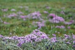flores del trentino Imagen de archivo libre de regalías
