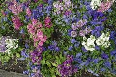 flores del trentino Fotografía de archivo libre de regalías