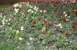 flores del trentino Imagen de archivo