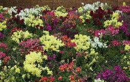 flores del trentino Fotos de archivo