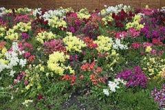 flores del trentino Fotografía de archivo