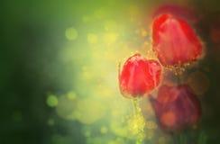 Flores del tulipán de la fantasía fotografía de archivo