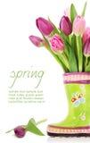 Flores del tulipán del resorte en cargadores del programa inicial Foto de archivo libre de regalías