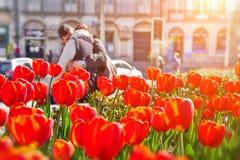 Flores del tulipán en la ciudad, cierre para arriba Pares de amantes en fondo fotos de archivo libres de regalías
