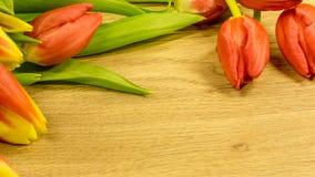 Flores del tulipán en rojo y amarillo Fotos de archivo