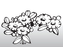 Flores del vector Imagen de archivo libre de regalías