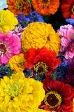 Flores del verano Fotografía de archivo libre de regalías