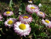 Flores del verano Fotos de archivo