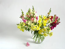 Flores del verano Fotos de archivo libres de regalías