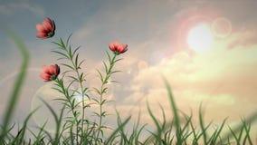 Flores del verano almacen de metraje de vídeo