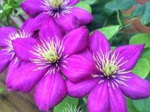 ¡Flores del verano! imagen de archivo libre de regalías