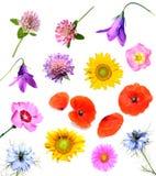 Flores del verano Imagenes de archivo