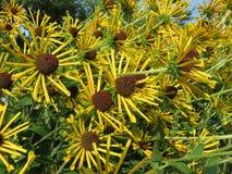 Flores del verano de agosto Fotos de archivo