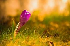 Flores del verano de la primavera Imagen de archivo libre de regalías